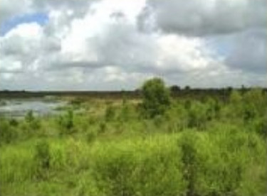 SA-10 Wetland Mitigation-Monitoring-Plan – Polk County, FL